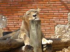 relaxed leeuwin